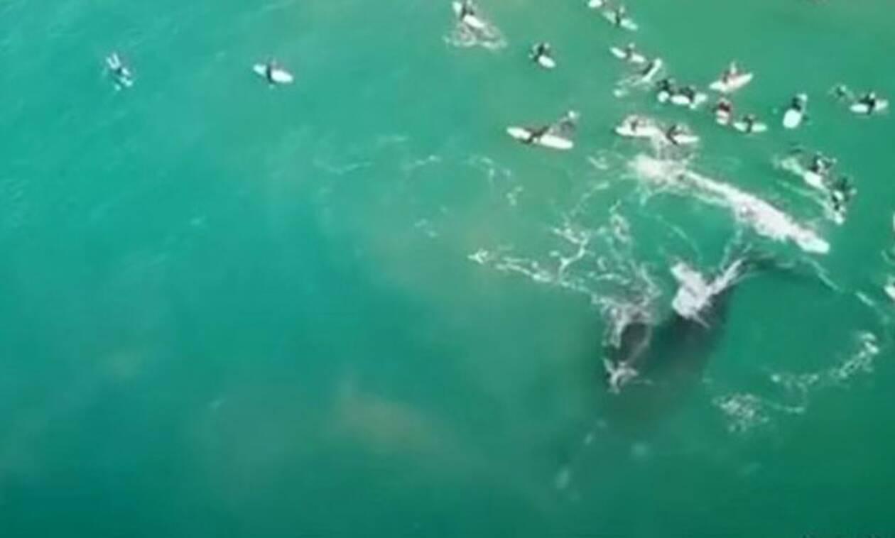 Η στιγμή που γιγάντια φάλαινα επιτίθεται σε κολυμβητές!