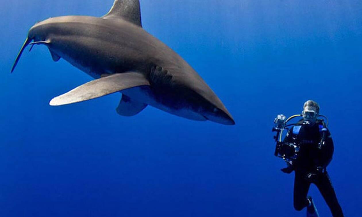 Σπάνιος αλεποκαρχαρίας έρχεται στο ένα μέτρο από τον δύτη!