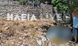 Τραγωδία στην Ηλεία - Έπεσε από δέντρο και σκοτώθηκε