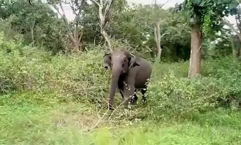 Πήγαν για σαφάρι αλλά τους κυνήγησε άγριος ελέφαντας (vid)