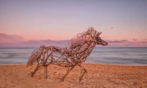 Γλυπτά ζώα από ξύλα που ξεβράζει ο ωκεανός δημιουργεί καλλιτέχνης στην Αυστραλία