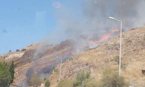 Φωτιά ΤΩΡΑ στη Μυτιλήνη - Ισχυροί άνεμοι στην περιοχή