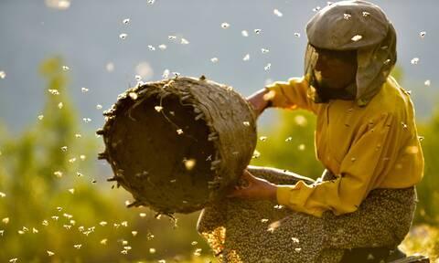 Έτσι θα καταλάβεις αν το μέλι σου είναι καλό ή όχι