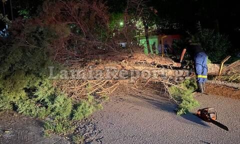 Φθιώτιδα: Δέντρο καταπλάκωσε γυναίκα στο ΚΑΑΥ Καραβομύλου