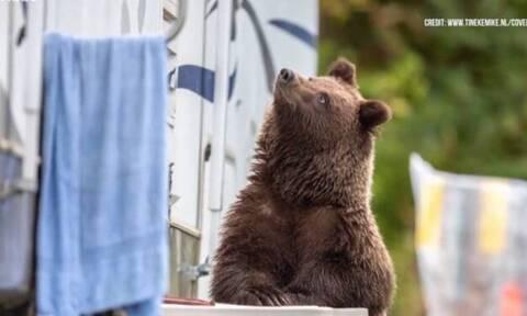 Βίντεο: Βγήκαν στην αυλή τους και είδαν την πεινασμένη αρκούδα να… αράζει!