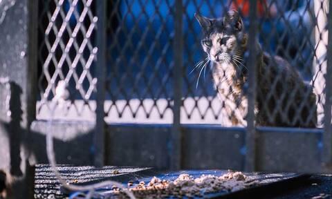 Τρομερό θέαμα: Ένας στρατός από γάτες στους δρόμους