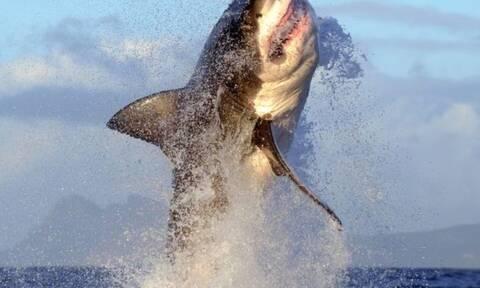 Βίντεο: «Δαιμονισμένος» καρχαρίας πηδάει 2 μέτρα πάνω από το νερό!