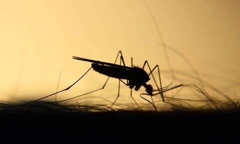 Κουνούπια «τέλος»: Πώς δεν θα σας ξανά τσιμπήσουν ποτέ! (photos)