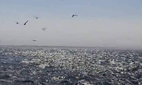 Ψάρευαν σε βάρκα - Αυτό που έζησαν δεν θα το ξεχάσουν ποτέ (video)