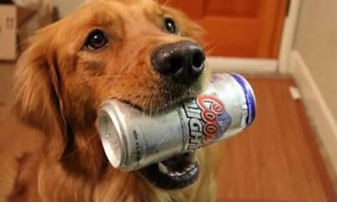 Βίντεο: Αυτός ο σκύλος είναι ΟΝΤΩΣ ο καλύτερος φίλος του ανθρώπου!