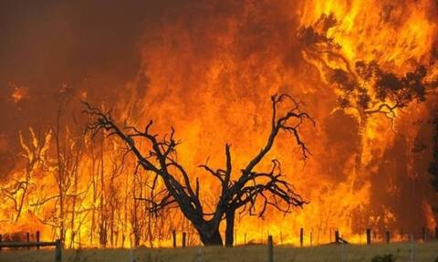 Δεκατρία χρόνια από τις φονικές φωτιές στην Ηλεία: Το χρονικό της ανείπωτης εθνικής τραγωδίας