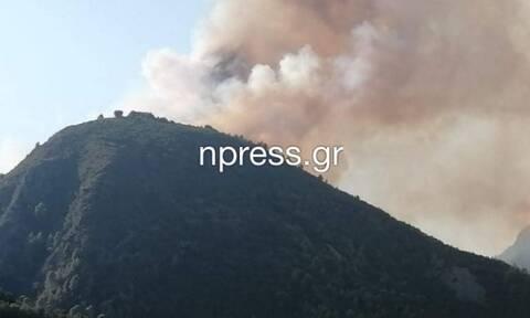 Φωτιά ΤΩΡΑ κοντά στη Ναύπακτο (video)