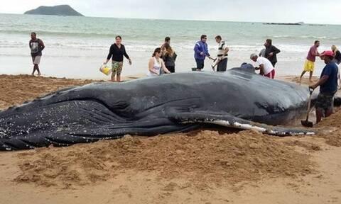 Δείτε τι έκαναν για να σώσουν τη φάλαινα (video)