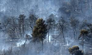 В Греции за последние три дня зафиксировано 37 лесных пожаров
