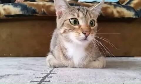 Βίντεο: Γάτα βλέπει θρίλερ – Δεν υπάρχουν οι αντιδράσεις της