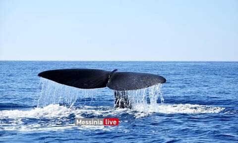 Δέος: Τεράστια φάλαινα εμφανίστηκε δίπλα σε σκάφος στη Μάνη (pics)