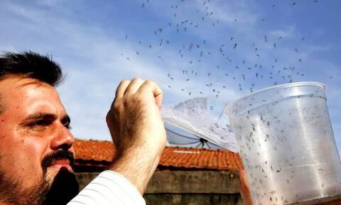 Επιστήμη: Έτσι ετοιμάζεται να αντιμετωπίσει τα επιζήμια κουνούπια!