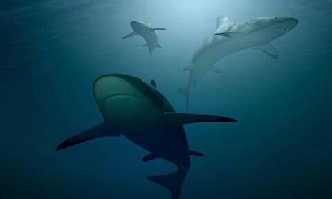 Ελλάδα: Σε αυτές τις θάλασσες μπορεί να πετύχεις καρχαρίες