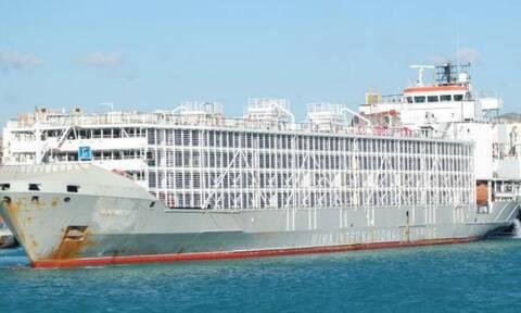 Τυφώνας Μαϊσάκ: Χάθηκε πλοίο με 43 άτομα πλήρωμα και χιλιάδες ζώα φορτίο