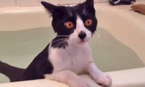 Αυτό το γατί θα σε κάνει να ξεχάσεις όσα ήξερες για τις γάτες!