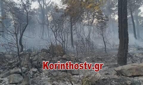Κορινθία: Εμπρησμό εξετάζουν οι Αρχές - Χωρίς ενεργό μέτωπο η φωτιά (pics&vid)