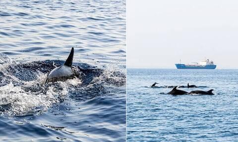 Κύπρος: Αγέλη δελφινιών στη θαλάσσια περιοχή Λεμεσού