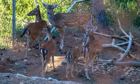 Θεσσαλονίκη: Άνοιξε τις πύλες του ο ζωολογικός κήπος (pics)