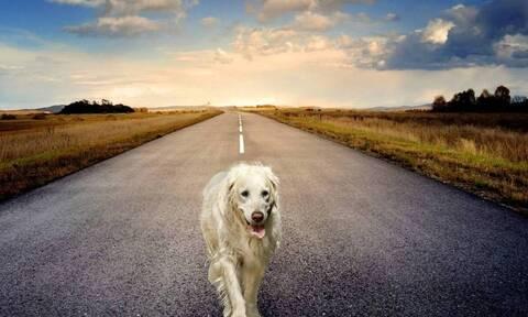 Οργή: Δείτε τι έκαναν ασυνείδητοι σε σκύλο (pics)