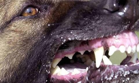 Σοκ στη Μεσσήνη: Σκύλος επιτέθηκε σε 7χρονο παιδί - Το τραυμάτισε σοβαρά στο λαιμό
