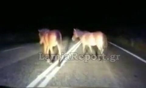 Φθιώτιδα: Απίστευτες εικόνες - Άλογα μέσα στο δρόμο (pics - vid)