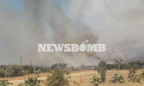 Φωτιά ΤΩΡΑ Ανάβυσσος: Στις αυλές των πρώτων σπιτιών οι φλόγες - Ανεξέλεγκτο το πύρινο μέτωπο