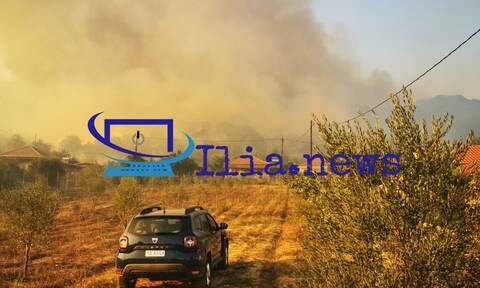 Φωτιά στην Ηλεία: Έφτασε στα σπίτια – Εκκενώνεται το χωριό Δάφνη