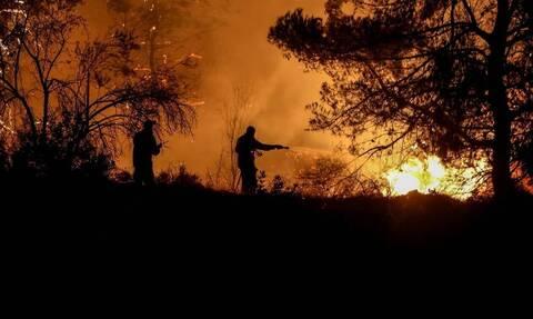Φωτιά στην Ηλεία: Ολονύχτια μάχη με τις φλόγες στην περιοχή Κολοκυθάς