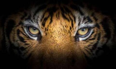 Μυθική κίνηση από ελληνική ομάδα, που ανακοίνωσε ποδοσφαιριστή με το «Eye of the tiger» (video)