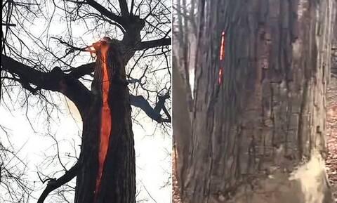 Δέντρο παίρνει φωτιά αλλά δεν καίγεται! (vid)