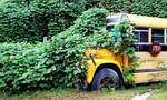 Προσοχή: Αυτό είναι το πιο δηλητηριώδες φυτό στον πλανήτη
