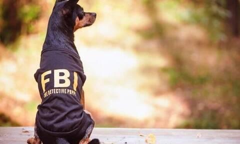 Αυτά είναι τα 4 πιο ακίνδυνα ζώδια σύμφωνα με το FBI