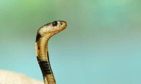 Φίδι μπαίνει στην μπλούζα γυναίκας - Απίστευτος ο λόγος (vid)