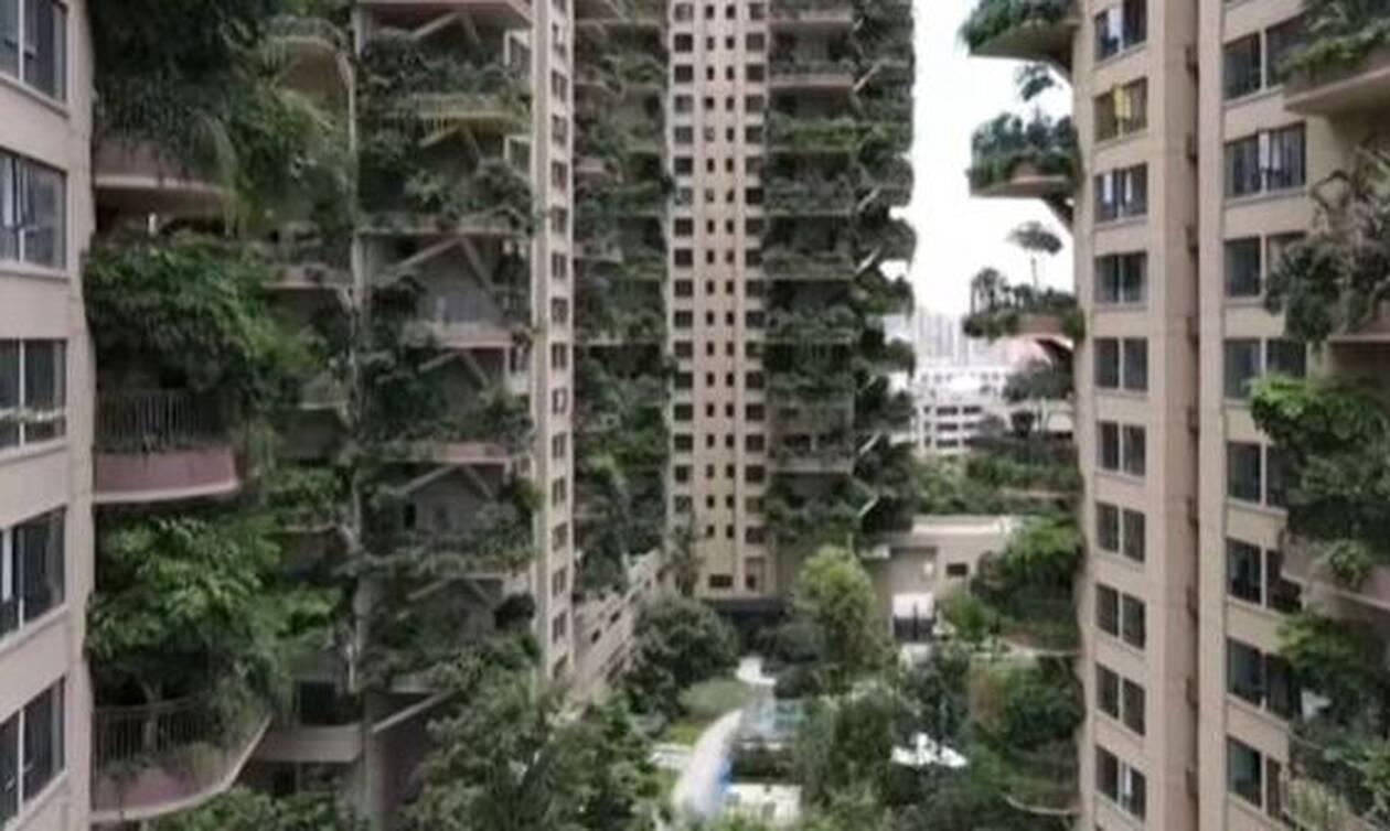 Οι κρεμαστοί κήποι της Κίνας: Διαφημίστηκαν σαν παράδεισος αλλά κατέληξαν... κόλαση - Δείτε γιατί