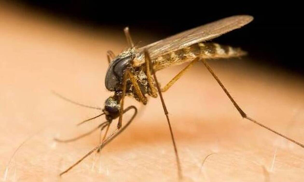 Ξάνθη: Αυξήθηκαν σε 9 τα κρούσματα ιού του Δυτικού Νείλου