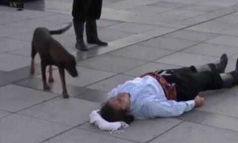 Αδέσποτος σκύλος διέκοψε παράσταση - Δεν υπάρχει ο λόγος (vid)