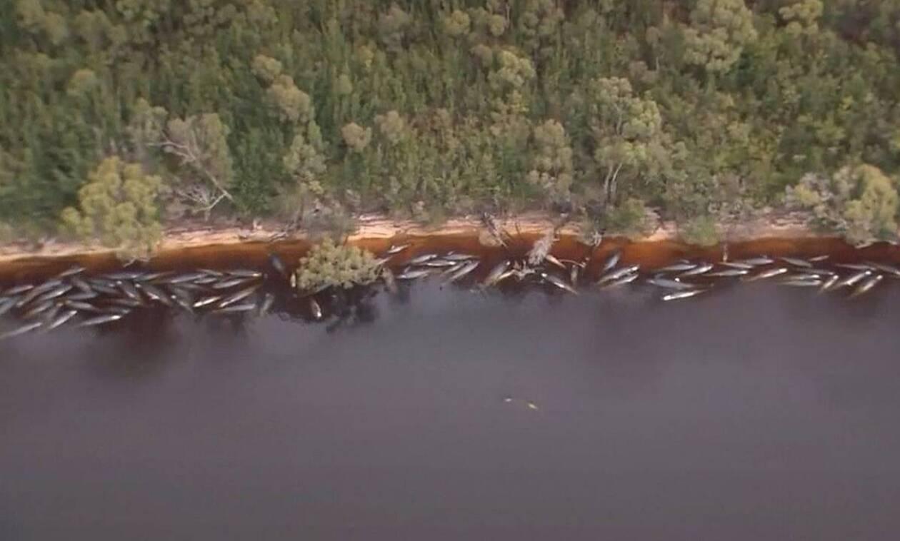 Εκατοντάδες νεκρές φάλαινες γέμισαν τις ακτές - Η ανησυχία των ειδικών (vid)