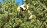 Τι κάνει αυτός ο σκύλος πάνω στο δέντρο; Δεν πάει ο νους σας…