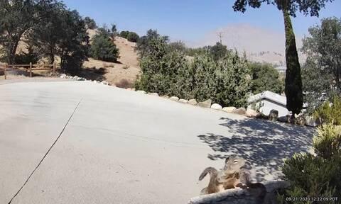 Κροταλίας πάει να τσιμπήσει σκίουρο - Η τρομερή αντίδρασή του (pics+vid)