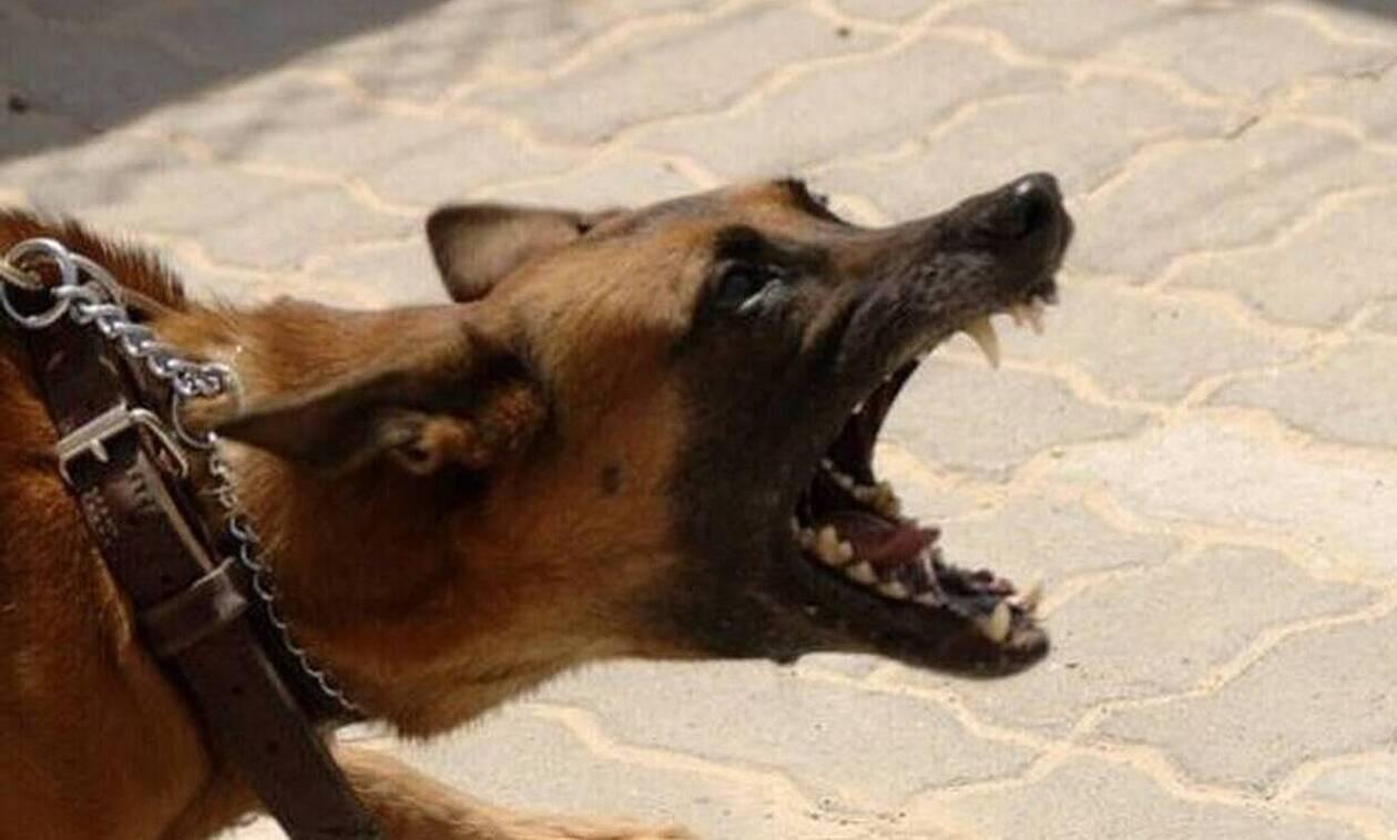 Τρόμος στη Λαμία - Σκύλος επιτέθηκε σε ντελιβερά
