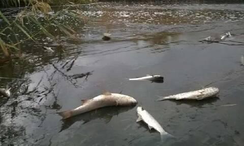 Λάρισα: Γέμισε νεκρά ψάρια ο Πηνειός