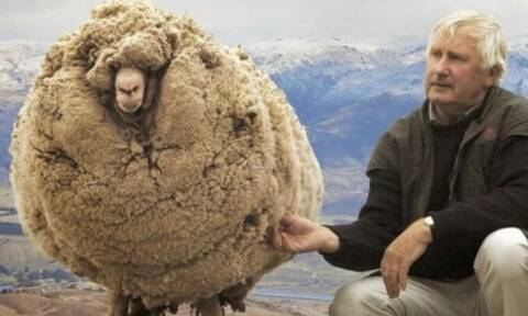Τσάντισε το πρόβατο - Δείτε τι του έκανε! (vid)