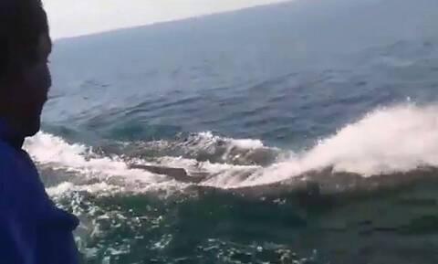 Μεγάλη φάλαινα έκανε… κόντρα με πλοίο (vid)