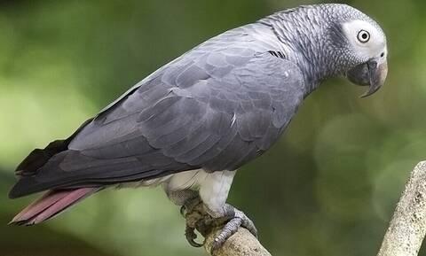 Ζωολογικός κήπος έκρυψε παπαγάλους γιατί έβριζαν τον κόσμο!