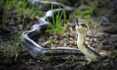 Πήγε να σώσει φίδι από το δρόμο και τον τσίμπησε (vid)